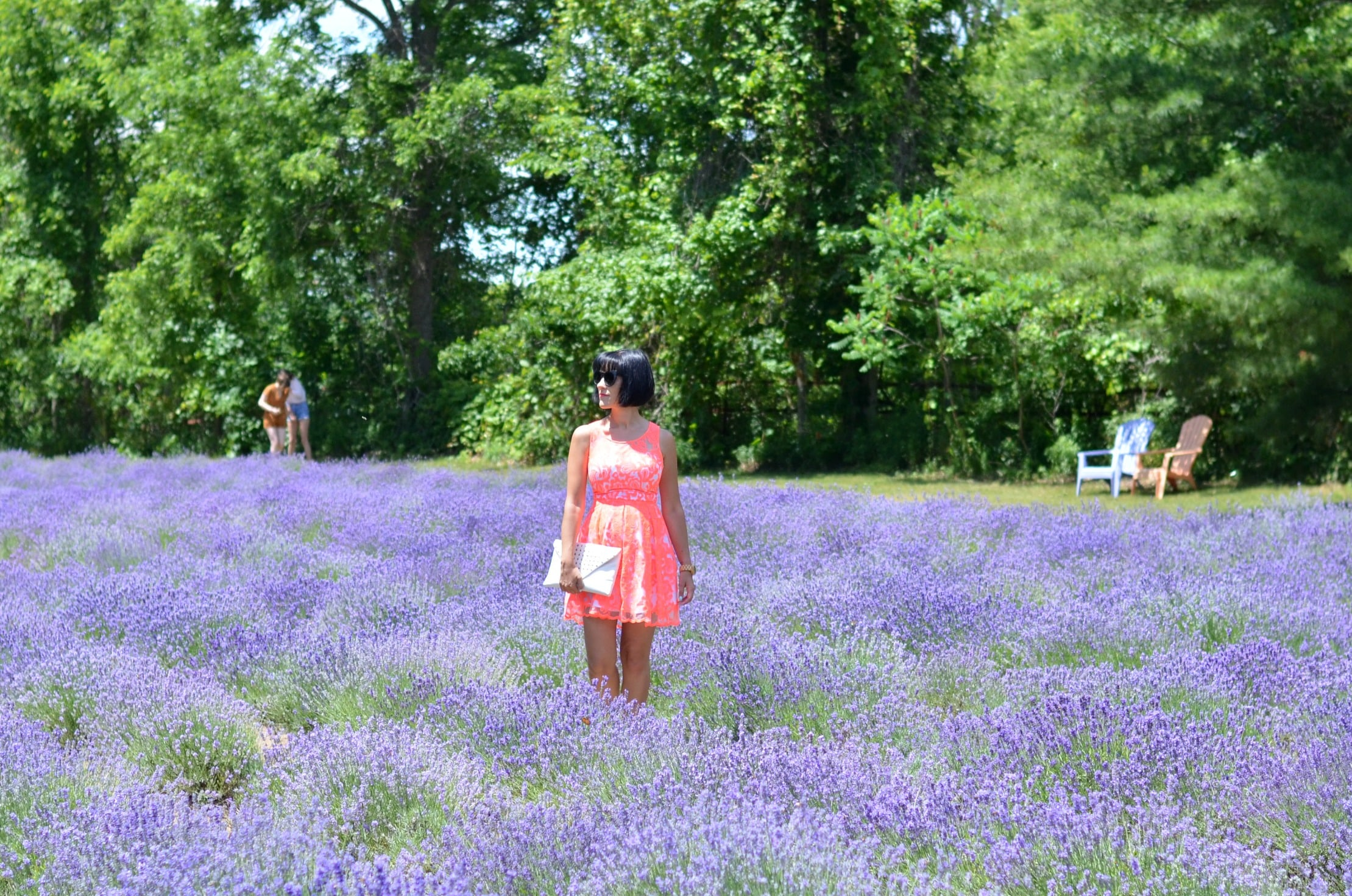 Steed & Company Lavender Farm