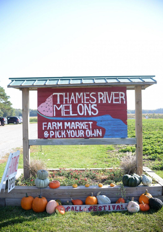 Thames River Melons